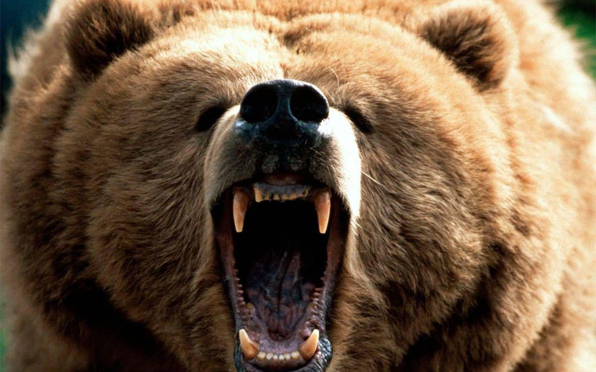 Η αρκούδα συμβολίζει την πτώση των αγορών (μετοχές, ομόλογα κλπ)